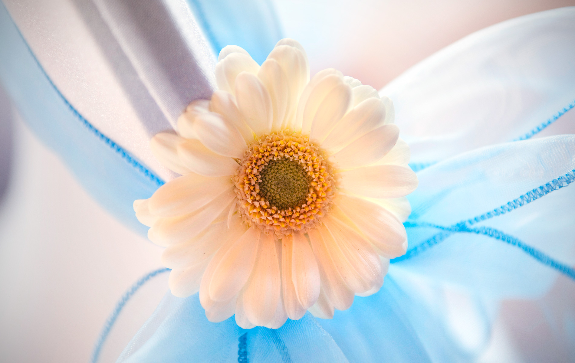 Flower-chaircovers-wedding-details-Canada-Lodge-wedding=photographers